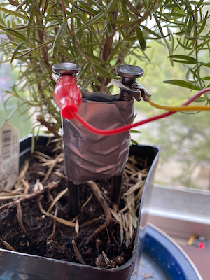 A plant with a home-made soil moisture sensor in the soil